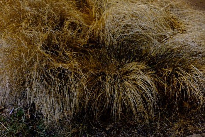 Polizeilich dokumentierter Sachschaden: Abgestorbenes Gras wurde abgefackelt