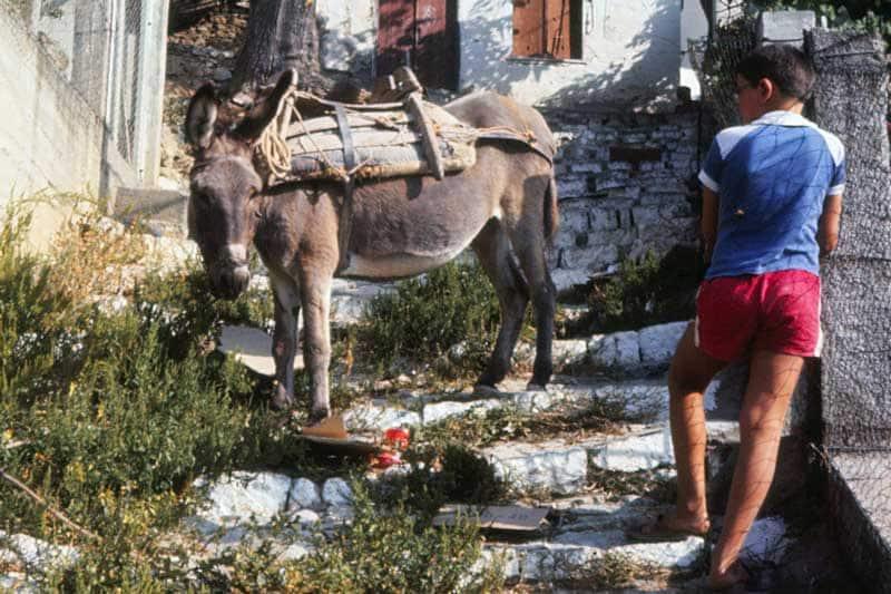 Das Bild zeigt einen Esel als Arbeitstier im Hintergrund. Im Vordergrund steht eine jugendliche Person. Beide blicken einander an. Aufgenommen mit einer Voigtländer Vito B aus der Mitte der 1950-er Jahre auf der nördlichen griechischen Insel Skiathos Anfang der 1980-er Jahre.